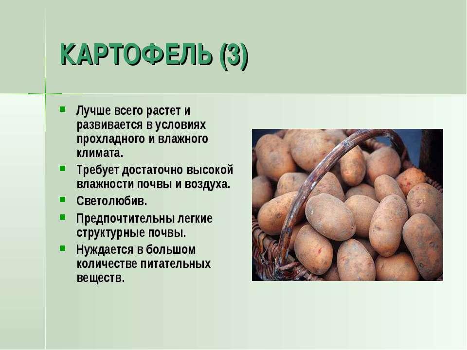 КАРТОФЕЛЬ (3) Лучше всего растет и развивается в условиях прохладного и влажн...