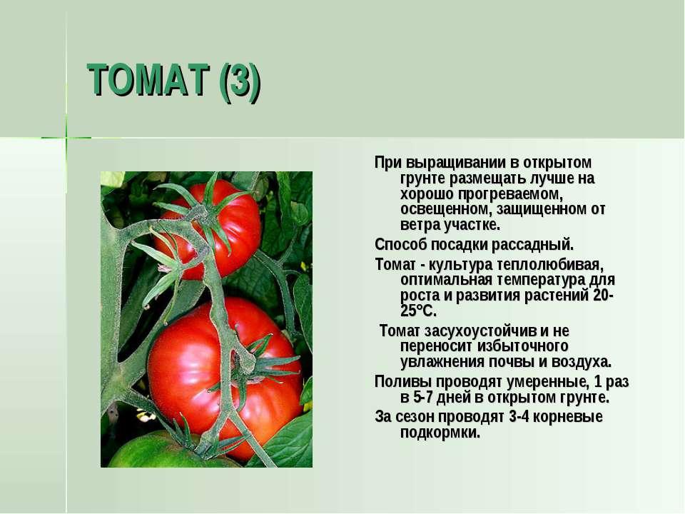 ТОМАТ (3) При выращивании в открытом грунте размещать лучше на хорошо прогрев...