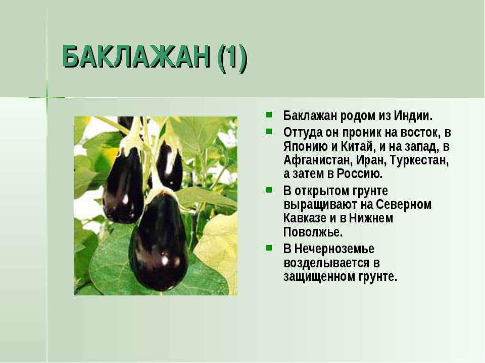 БАКЛАЖАН (1) Баклажан родом из Индии. Оттуда он проник на восток, в Японию и ...