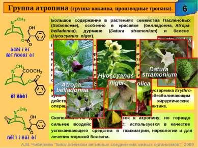 "Группа атропина (группа кокаина, производные тропана). 6 А.М. Чибиряев ""Биоло..."