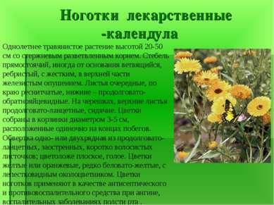Ноготки лекарственные -календула Однолетнее травянистое растение высотой 20-5...