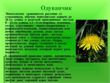 Одуванчик Многолетнее травянистое растение со стержневым, обычно неветвистым ...