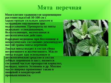 Мята перечная Многолетнее травянистое корневищное растение высотой 30-100 см ...