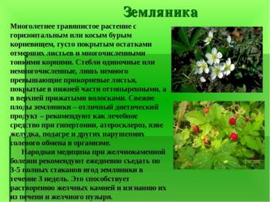 Земляника Многолетнее травянистое растение с горизонтальным или косым бурым к...