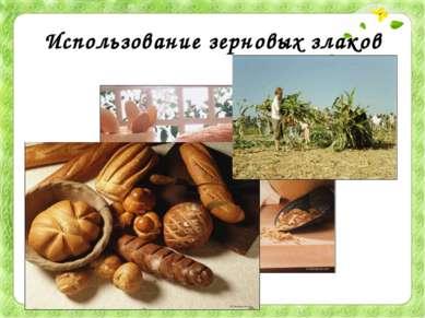 Использование зерновых злаков Из пшеничной муки выпекают белый хлеб. А из ржа...