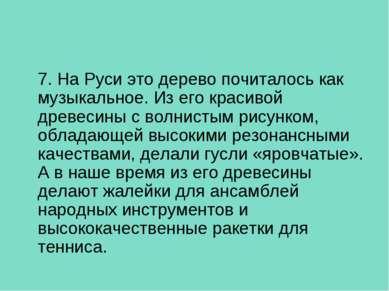 7. На Руси это дерево почиталось как музыкальное. Из его красивой древесины с...