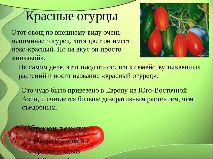 Красные огурцы Этот овощ по внешнему виду очень напоминает огурец, хотя цвет ...
