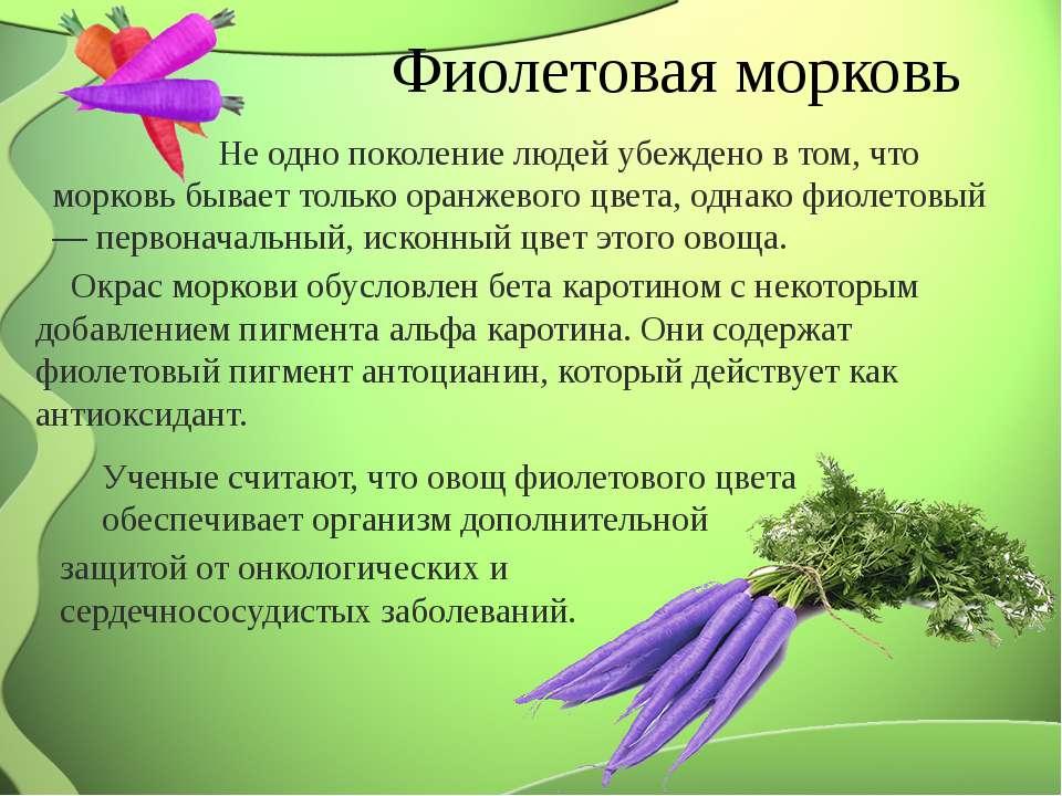 Фиолетовая морковь Окрас моркови обусловлен бета каротином с некоторым добавл...
