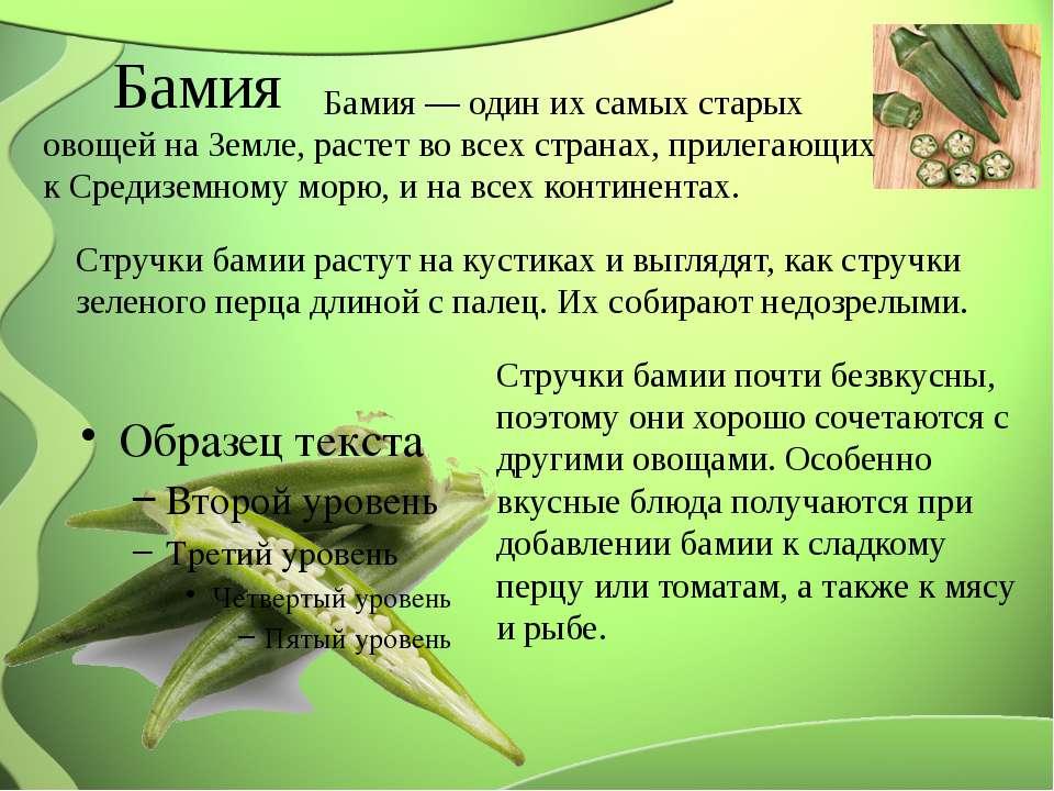 Бамия Бамия — один их самых старых овощей на Земле, растет во всех странах, п...