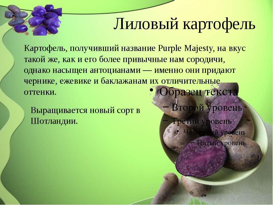 Лиловый картофель Картофель, получивший название Purple Majesty, на вкус тако...