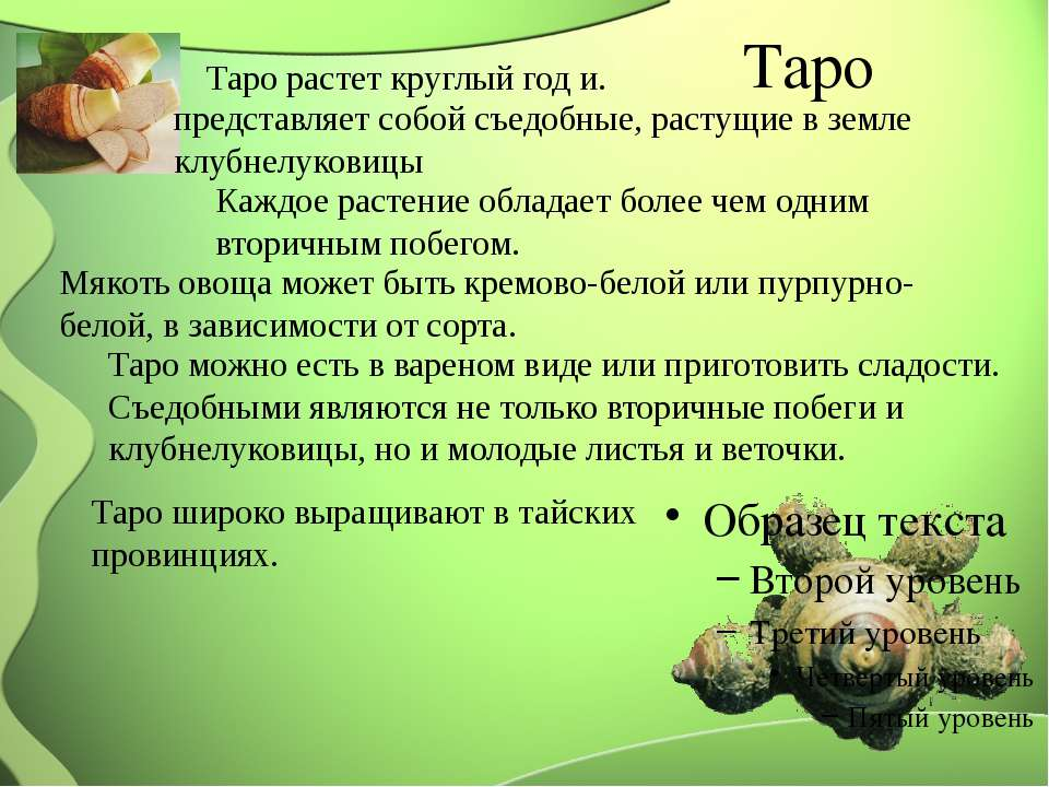 Таро Таро растет круглый год и. представляет собой съедобные, растущие в земл...