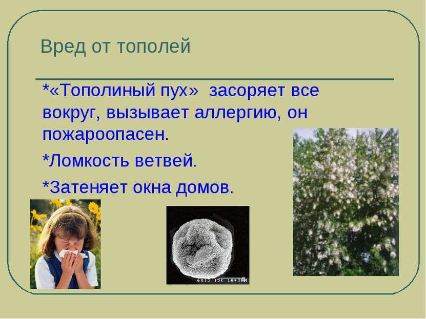 Вред от тополей *«Тополиный пух» засоряет все вокруг, вызывает аллергию, он п...