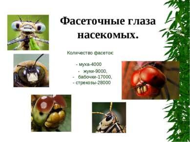 Количество фасеток: - муха-4000 - жуки-9000, - бабочки-17000, - стрекозы-2800...