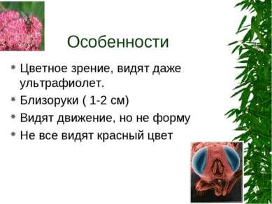Особенности Цветное зрение, видят даже ультрафиолет. Близоруки ( 1-2 см) Видя...