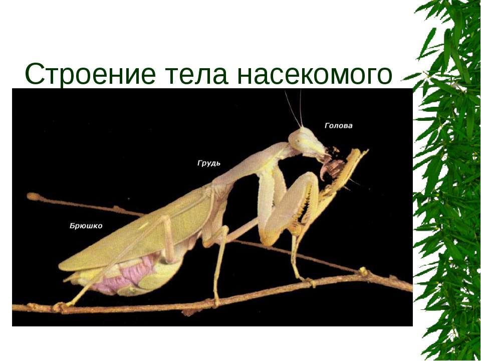 Строение тела насекомого