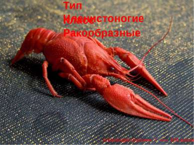 Тип Членистоногие Класс Ракообразные Александра Шульжик. 7 «А». 636 школа.