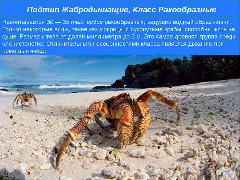 Насчитывается 30 — 35 тыс. видов ракообразных, ведущих водный образ жизни. То...