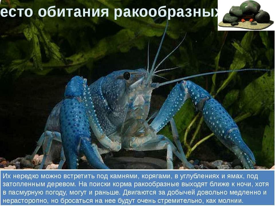 Их нередко можно встретить под камнями, корягами, в углублениях и ямах, под з...