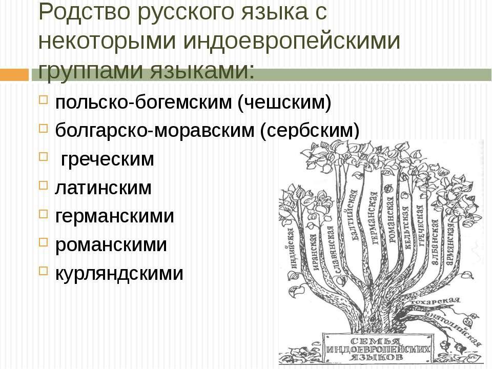 Родство русского языка с некоторыми индоевропейскими группами языками: польск...