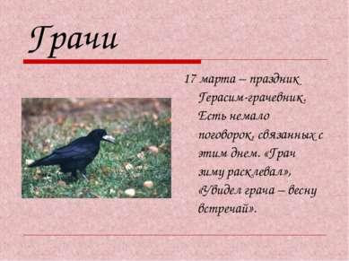 Грачи 17 марта – праздник Герасим-грачевник. Есть немало поговорок, связанных...