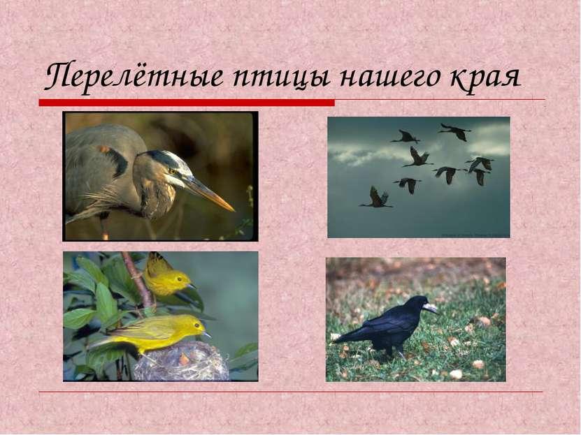 Перелётные птицы нашего края