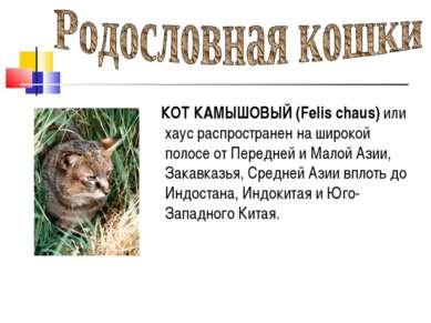 КОТ КАМЫШОВЫЙ (Felis chaus) или хаус распространен на широкой полосе от Перед...