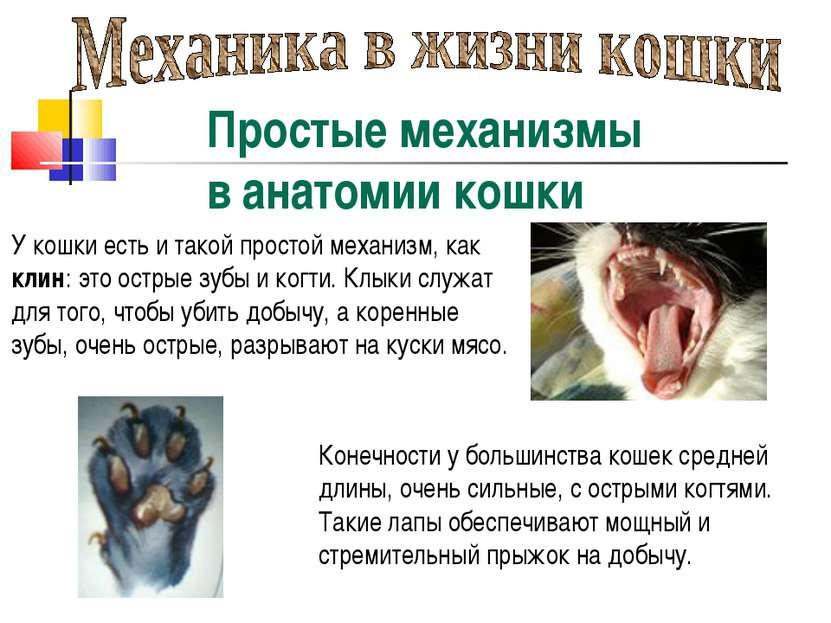 Простые механизмы в анатомии кошки У кошки есть и такой простой механизм, как...