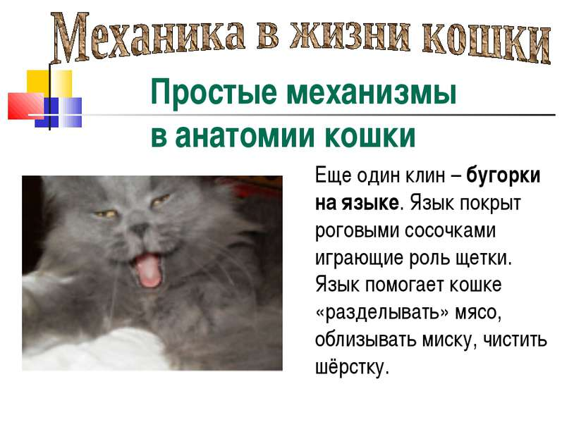Простые механизмы в анатомии кошки Еще один клин – бугорки на языке. Язык пок...