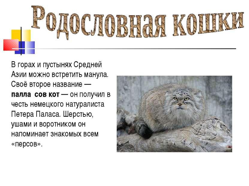 В горах и пустынях Средней Азии можно встретить манула. Своё второе название...