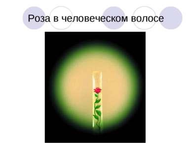 Роза в человеческом волосе