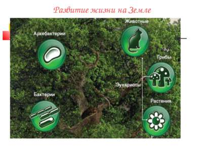 Развитие жизни на Земле