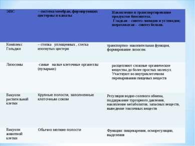 ЭПС – система мембран, формирующих цистерны и каналы Накопление и транспортир...