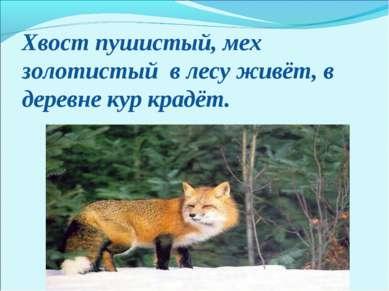 Хвост пушистый, мех золотистый в лесу живёт, в деревне кур крадёт.