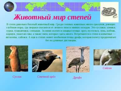 Животный мир степей В степи довольно богатый животный мир. Среди степных живо...