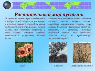 В пустыне немало приспособившихся к ней растений. Многие из них живут в пусты...