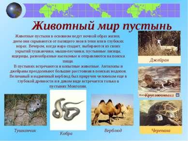 Животный мир пустынь Тушканчик Джейран Животные пустыни в основном ведут ночн...