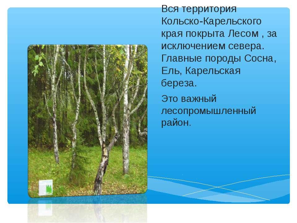 Вся территория Кольско-Карельского края покрыта Лесом , за исключением севера...