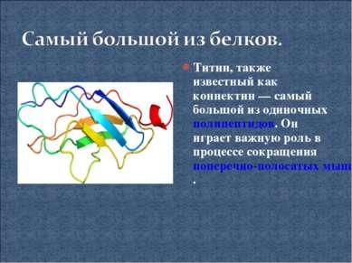 Титин, также известный как коннектин— самый большой из одиночных полипептидо...