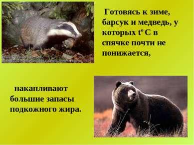 Готовясь к зиме, барсук и медведь, у которых tо С в спячке почти не понижаетс...