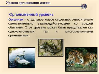 Уровни организации жизни Организменный уровень Организм – отдельное живое сущ...