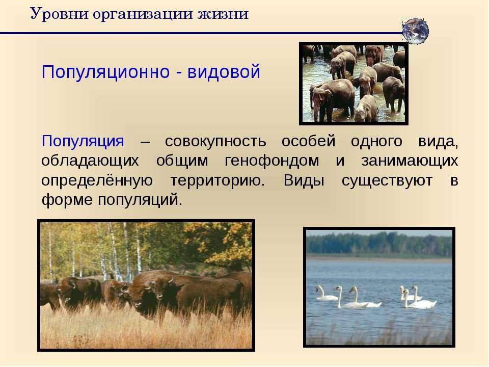 Уровни организации жизни Популяционно - видовой Популяция – совокупность особ...