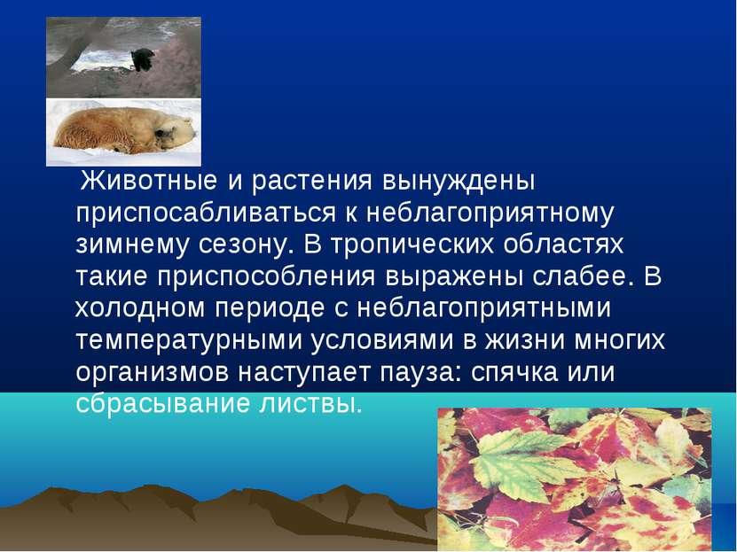 Животные и растения вынуждены приспосабливаться к неблагоприятному зимнему се...