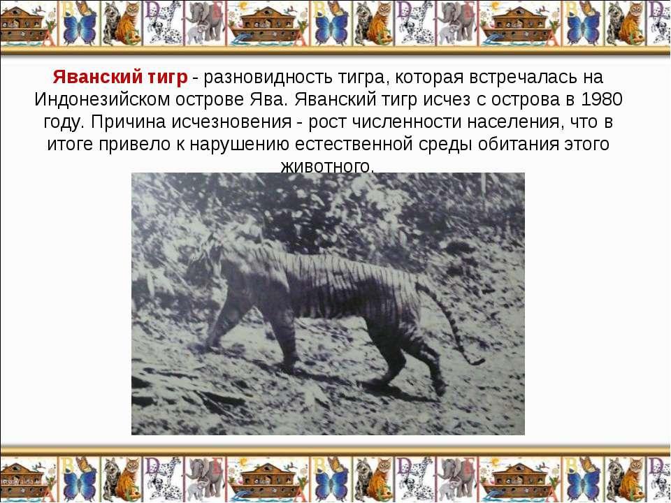 Яванский тигр - разновидность тигра, которая встречалась на Индонезийском ост...