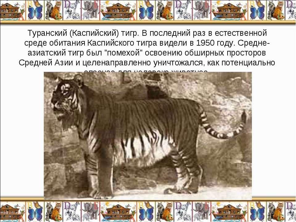 Туранский (Каспийский) тигр. В последний раз в естественной среде обитания Ка...