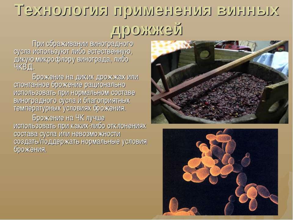 Технология применения винных дрожжей При сбраживании виноградного сусла испол...
