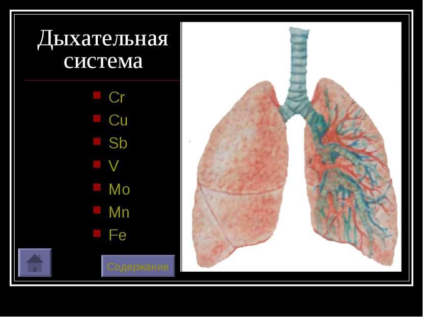 Дыхательная система Cr Cu Sb V Mo Mn Fe Содержание