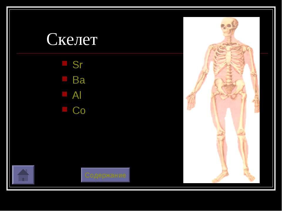 Скелет Sr Ba Al Co Содержание
