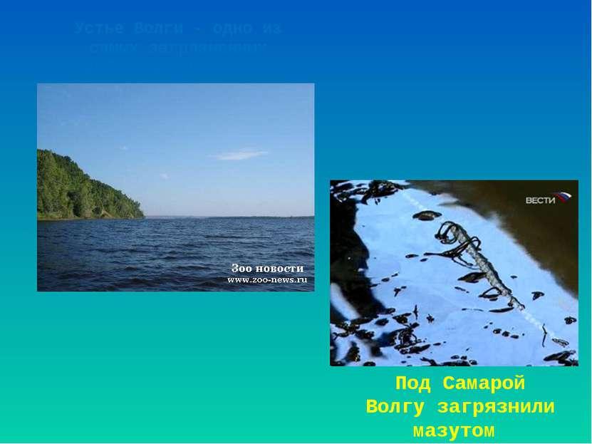 Устье Волги - одно из самых загрязненных прибрежных мест мира. Под Самарой Во...
