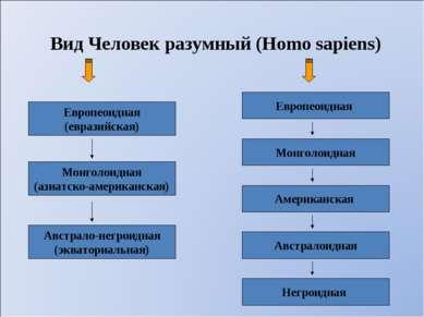 Вид Человек разумный (Homo sapiens) Европеоидная (евразийская) Европеоидная М...