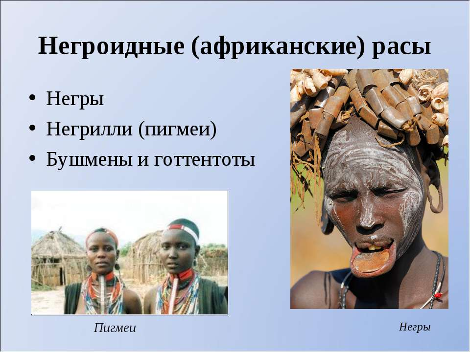 Негроидные (африканские) расы Негры Негрилли (пигмеи) Бушмены и готтентоты Не...